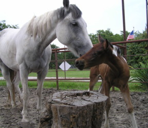 mom and baby horse coloring pages images source - Mom Baby Horse Coloring Pages